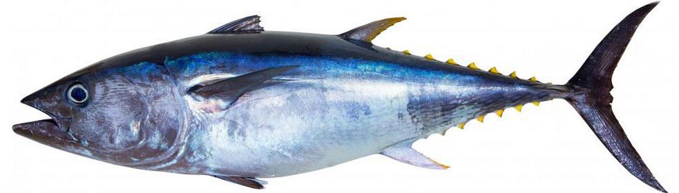 Fortoldning af fødevarer - frisk fisk